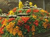 続 日本100名城 戦国の城 織田信長 小牧山城(信長期) お城 模型 ジオラマ完成品 A4サイズ