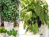 土不要(水栽培)&自宅で野菜をどっさり収穫出来る!アクア栽培キット ie・na(イエナ)