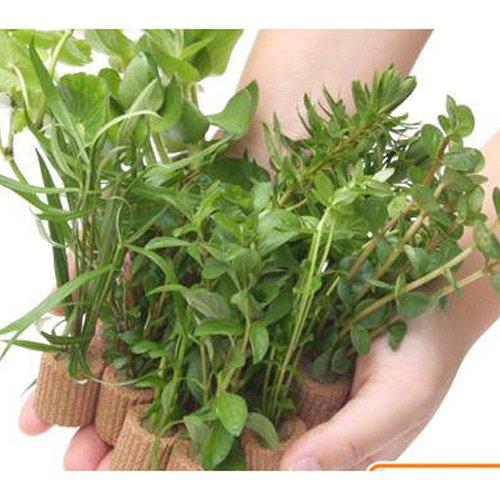 (水草)置くだけ簡単 ライフマルチ(茶) おまかせ有茎草10種(水上葉)(無農薬)(計10個) 本州・四国限定[生体]