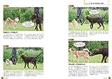 DVDBOOK 犬はしぐさで会話する(1): ヴィベケ・リーセの犬のボディランゲージ解説 (<DVD>) 画像