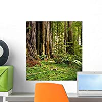 Redwood Forest Wall Mural by Wallmonkeys Peel and Stick Graphic (18 in H x 17 in W) WM36280 [並行輸入品]
