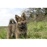 かわいい子犬の動物 - #30490 - キャンバス印刷アートポスター 写真 部屋インテリア絵画 ポスター 90cmx60cm