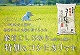 【精米】29年産 石川県 能登産 コシヒカリ 稲穂 10K【配送無料】