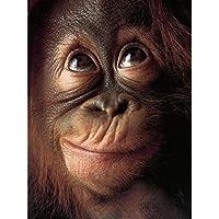 5d diyラウンドダイヤモンド刺繍猿類人猿オランウータンチンパンジーモンキーダイヤモンド絵画クロスステッチ動物家の装飾45×60センチ