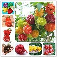 種子のパッケージ:袋混合異なる唐辛子の種は、非遺伝子組み換え野菜の種