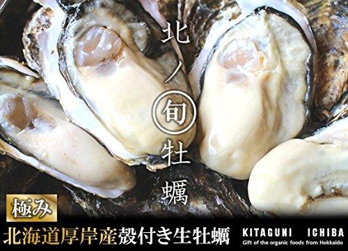 【北海道厚岸産 生牡蠣 殻付き 希少な3Lサイズ 30個 (150g~200g/1個) 軍手・カキナイフ付】 満天☆青空レストランでご紹介された厚岸の極上牡蠣! 世界中の食通をうならせる海のミルク。創業70年を誇る厚岸の牡蠣漁師より直送します。時にはギフトに、時には自分へのご褒美をちょっと贅沢に。 (30個)
