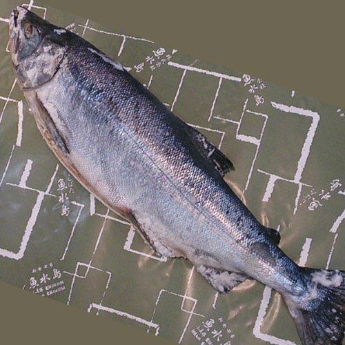 魚水島 「厳選」新巻鮭 5kg物...