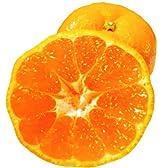 【糖度12度以上】ミカちゃんマークの「静岡:三ケ日青島みかん」 【秀グレード】MまたはLサイズ 10kg