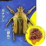 カプセルQミュージアム 樹液に集まる昆虫 真夏の夜の宴 [5.カナブン(銅色)&ヨツボシケシキスイ](単品)