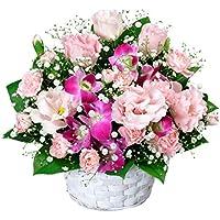 誕生日フラワーギフト 花キューピットのトルコキキョウとデンファレのアレンジメント花 ギフト 誕生日 プレゼント