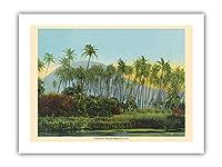 ココヤツのヤシの木 - ハワイ - ビンテージなハワイアンカラーのハガキ c.1910s - プレミアム290gsmジークレーアートプリント - 30.5cm x 41cm