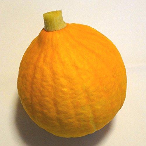 コリンキー まるごと1個(生食できる黄色いカボチャ)福岡産