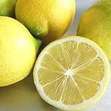 広島県産 瀬戸内レモン 5kg / ノーワックス ・ 防腐剤不使用 ( 規格外 ) 産地直送