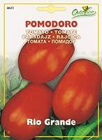 【HORTUS社種子】【Art.4631】イタリアントマト・リオグランデ