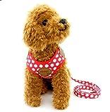 Ranphy 超小型犬 小型犬 猫 胴輪 ハーネス リード セット ドット柄 かわいい 肉球 調整可能 通気性 3サイズ (レッド,S)