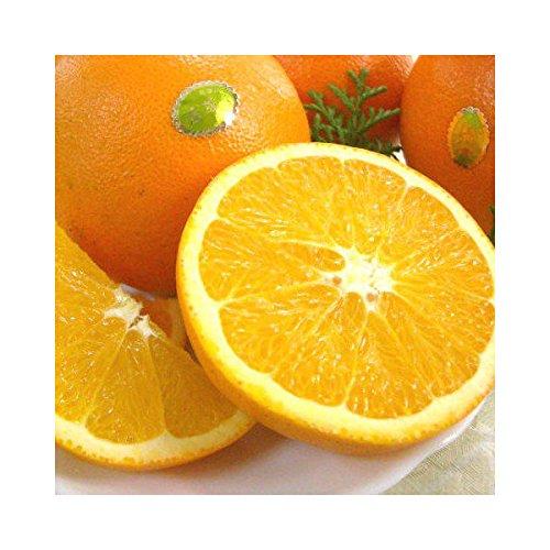 紀州田舎の小さな八百屋さん【訳あり 家庭用】 和歌山県産 ネーブルオレンジ 5.5kg