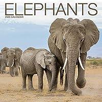 Elephants Calendar 2020