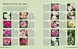 How to Garden: Growing Roses 画像
