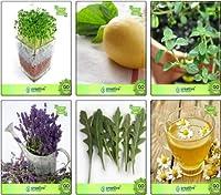 SEEDコンボパッククレス、レモンバジル、タイム英語冬、ラベンダー、ドイツChamoe種子コンボパックSEEDシード(パケットあたり6)により、