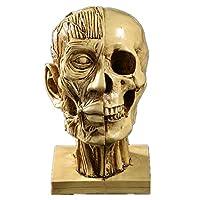 インテリアの装飾ハロウィーンのギフトマッスルヘッドの頭蓋骨教材用品