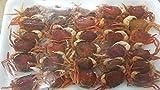 限定品 冷凍 沢蟹甘露煮 30匹 冷凍 解凍後そのままお召し上がり頂けます。