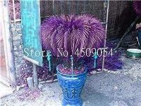 ホームガーデンビッグ盆栽10PCSの のためのバッグ鉢植えの花盆栽ソテツの木をINGのソテツ盆栽鉢植えバルコニーは鉢植え:21