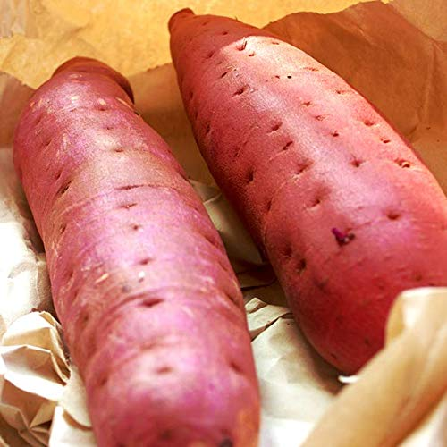 紅はるか さつまいも 5kg (鹿児島産 静岡産 サツマイモ)