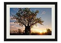 ツリーと夕日 風景の写真木製黒額縁アートポスター(40cmx60cm)