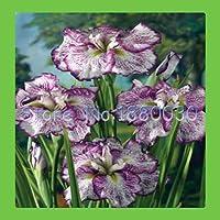 日本の青いアイリスの花の紫と白の斑点を付けられたパターンの50個の魅力的なミックス種&アンプ。生き延びやすいDiyの家の庭