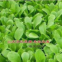20日bonsaiingホーム野菜チキン野菜盆栽テラス野菜シーズンズは、盆栽の100pcsをestedすることができます