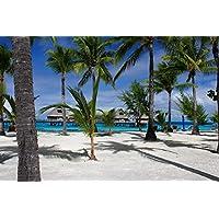 トロピカルビーチのヤシの木 - #44760 - キャンバス印刷アートポスター 写真 部屋インテリア絵画 ポスター 50cmx33cm
