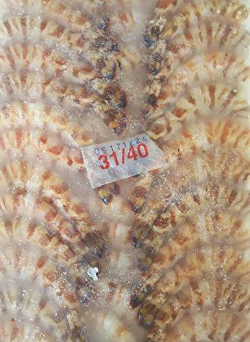 31-40車海老(無頭)1.8kg(約124匹〜160匹)×6枚 業務用 限定品 アイスブロック