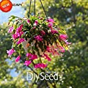 SEEDSのPLAT会社 Zygocactus Truncatusシャコバサボテン種子屋内鉢植えの花緑の植物の種子100個 #8KRIL4
