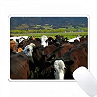 Cows and Mt Somers、ニュージーランド南島カンタベリー PC Mouse Pad パソコン マウスパッド