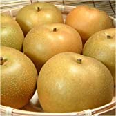 紀州 和歌山の 梨 豊水品種 4kg 【8玉】 ギフト