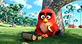 Sony - Angry birds le film (2Blu-ray+DVD)