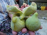 新鮮なライチLychyライチ種子、Leecheeフルーツ種子種子、-5粒子/バッグ