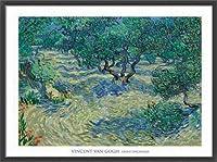 ポスター フィンセント ファン ゴッホ Olive Orchard 1889 額装品 ウッドベーシックフレーム(ブラック)