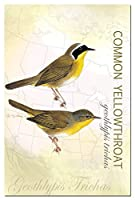 Tree-Free Greetings EcoNotes 12-Count Notecard Set with Envelopes 4 x 6 Inches Common Yellowthroat (66424) [並行輸入品]
