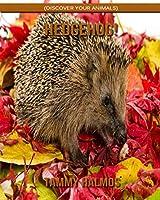 Hedgehog! (Discover Your Animals)