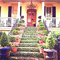 種子 - 盆栽100個希少な混合盆栽アイビークライミング植物鉢植え庭盆栽グリーン奇妙な植物ボストンアイビーアウトドア盆栽植物:7