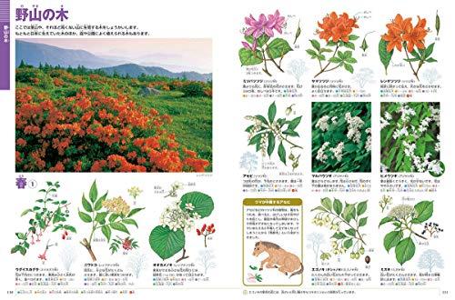 小学館『小学館の図鑑NEO植物新版』