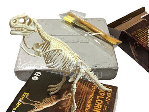 【mofu・mofu】 化石発掘体験 骨格標本 発掘セット ティラノ ザウルス 骨格 標本 化石 夏休み 工作 宿題に 恐竜化石発掘キット