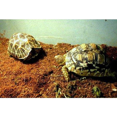 リクガメ,爬虫類用 天然ヤシガラ床材:ココマット 4L