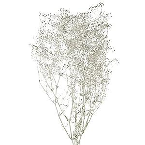 大地農園 プリザーブドフラワー スーパーソフトミニカスミ草(20g入り) DO000020-912