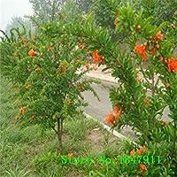 PLAT企業:20枚/ロット、盆栽egranate種子非常に甘いおいしい果物の種、多肉植物の種子種子