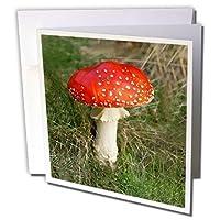 Mushrooms–Mushroom–グリーティングカード Set of 12 Greeting Cards