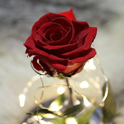 [プリザーブドフラワー] 真紅のバラが一輪、LEDライトにガラスドーム付き [ディズニー美女と野獣の永遠の愛をあなたに]
