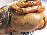 Amazon.co.jpボイル済み★Stone crab 5尾セット★石蟹、最大級、1尾800g以上