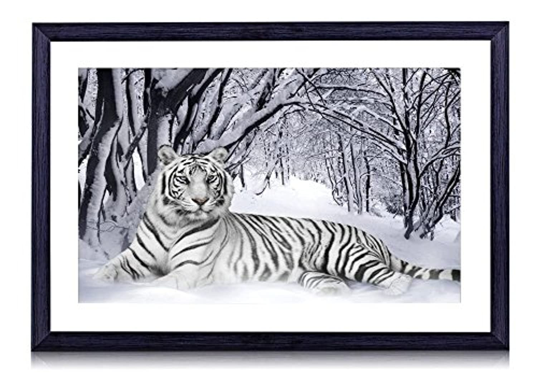 ホワイトタイガー動物 - #15484 - 黒の実木枠 壁掛け モダン インテリア アート 風景画 装飾 壁飾り 部屋の装飾 写真 ポスターー - 40cmx30cm